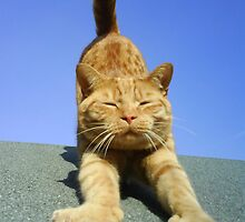 cat stretching on a sunny day by rkdownton