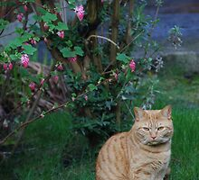 Cat in the garden under a tree by rkdownton