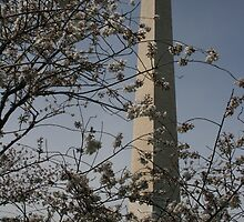 Cherry blossom and monument by Nicki Kenyon