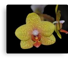 Lemon Orchid Canvas Print