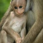 Monkey on the Nipple by Adam Webster