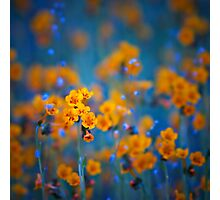 Flower dreams Photographic Print