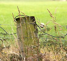 Electric Fence Post in Pasture Green by coffeebean