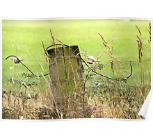 Electric Fence Post in Pasture Green Poster