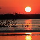 sunrise over the bay by kathy s gillentine