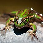 """""""The Frog"""" by Husky"""