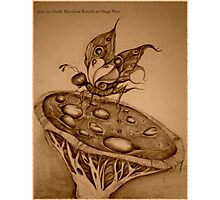 Double Hawkshead Butterfly Sepia Photo Photographic Print