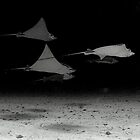 EagleRay by Robtoca