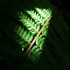 Light in the Forest - Fern by jojocraig