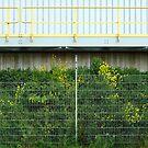 Through the fence by Marjolein Katsma