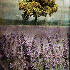 Lavender Fields by Rebecca Lefferts