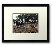 Four Clydesdales harrowing the field - Churchill Island, Easter 2010 Framed Print