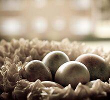 The Nest by Mandy Wiltse