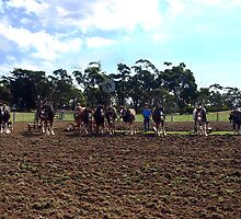 Working Horse Parade, Churchill Island, Easter 2010 by Bev Pascoe