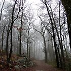 Spring Fog Short Cut Trail - Hot Springs National Park, Arkansas by Lee Hiller