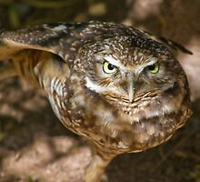 You lookin' at me? by Angela Pritchard