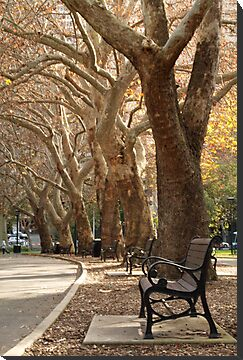 Belmore Park, Central by Kezzarama