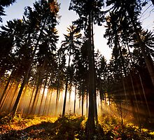 Show Me Your Light by Marco Heisler