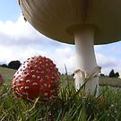 Giant Amanita. by Esther's Art and Photography