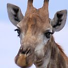 IN PORTRAIT - The Giraffe - giraffa camelopardis by Magaret Meintjes
