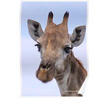 IN PORTRAIT - The Giraffe - giraffa camelopardis Poster