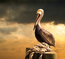 A Pelican after a Floridian Storm by Mal Bray