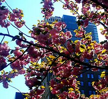Park Avenue in bloom by ShellyKay