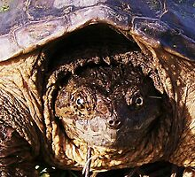 THE ALIGATER SNAPPING TURTLE by Terra 'Sunshine' Gilbert