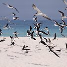 Beach with Black Skimmers by Dennis Cheeseman