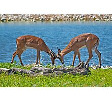 Duel in the sun Photographic Print