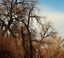 Just Around the Bend by Barb Miller