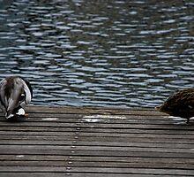 Sitting ducks by Caroline Brewer