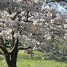 Yoshino Flowering Cherry by JeffeeArt4u