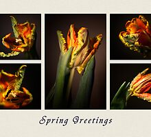Spring Greetings Card by Kasia-D