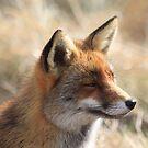 Fox-2_4956 by DutchLumix
