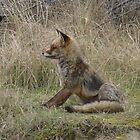 Fox (3) by angeljootje