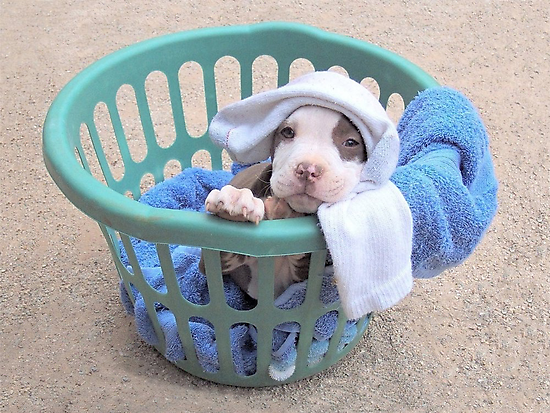 What Laundry? by Ginny York