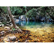 LIVING RAINFOREST Photographic Print