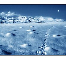 Moonwalk - animal track to the moon! by Mal Bray