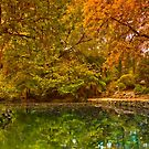 Autumn at Alfred Nicholas Memorial Gardens by Jason Green