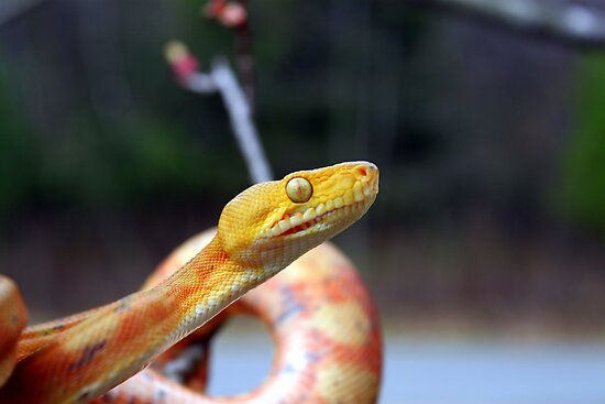 Slither by Reptilefreak