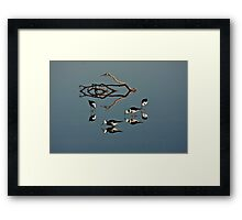 Four Black Winged Stilts Reflected Framed Print