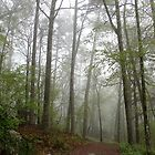 Fog in the New Spring Forest by Lee Hiller
