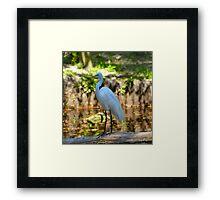 Great White Beauty of Homosassa Springs State Park Framed Print