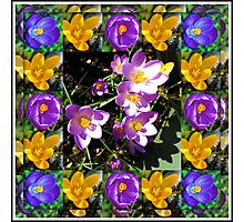 Crocus Collage in Mirrored Frame Photographic Print