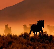 Nevada's High Desert Country  by Jeanne  Nations