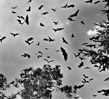 bats in flight by Simon Penrose