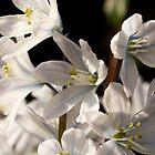 Wonderful Spring by imagic
