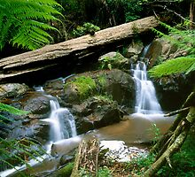Olinda Falls - Dandenong Ranges by David Firth
