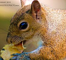Afternoon Snack by Julie Everhart